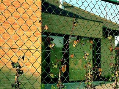 Забор из сетки рабицы с полимерным покрытием